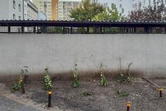 ogrod-lochowska-11